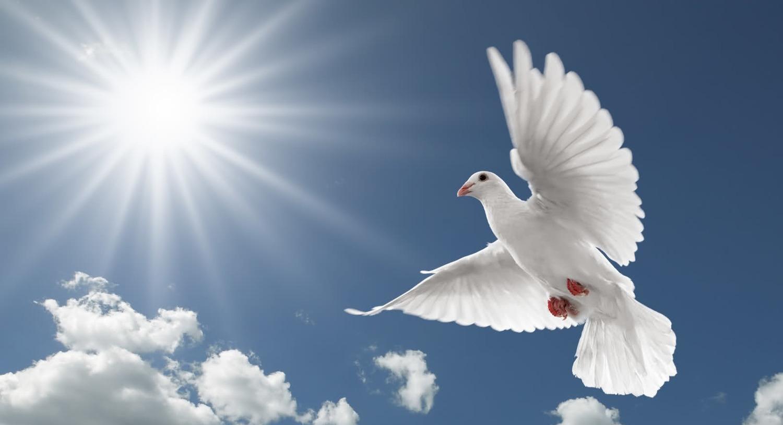 Pigeon-Beautiful-Best-HD-Wallpaper